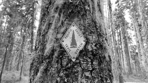 PCT marker on a mossy tree