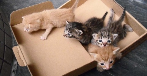A box of kittens