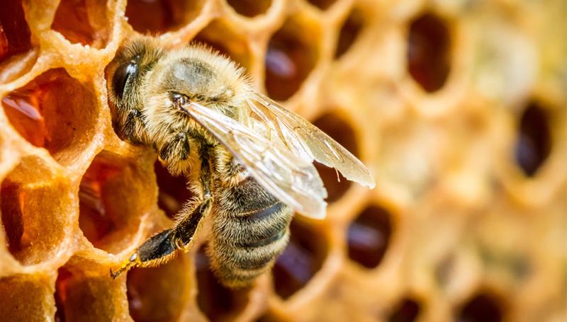 Imagem em destaque para o artigo: A importância das abelhas para o meio ambiente