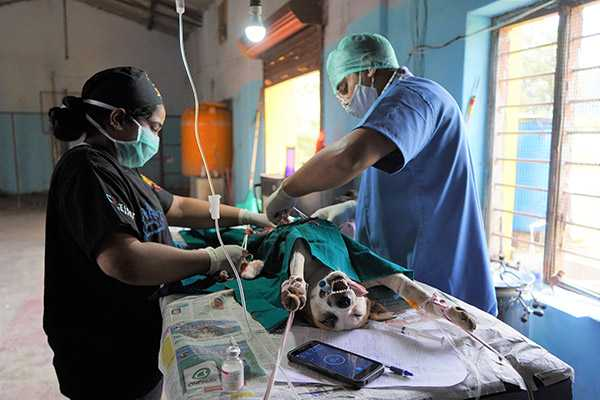 Early access to veterinary opportunities abroad