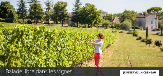 Balade dans les vignes au Domaine Gayrard