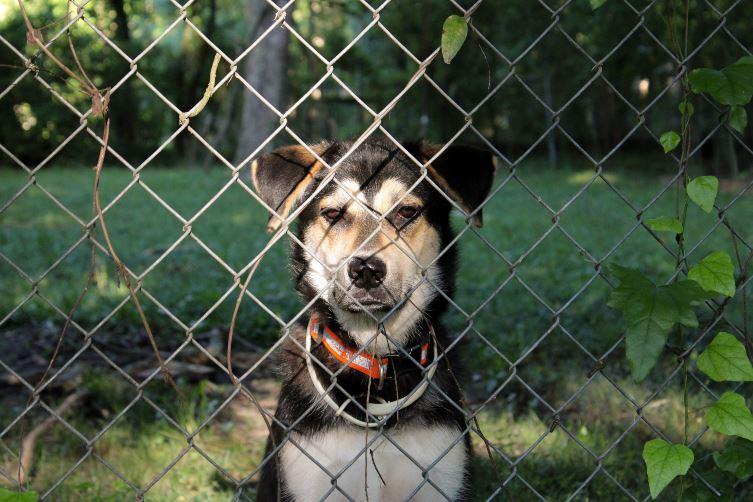 dog sitting behind fence