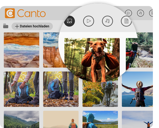 Die Benutzeroberfläche von Canto mit Ansicht der Bilddatenbank