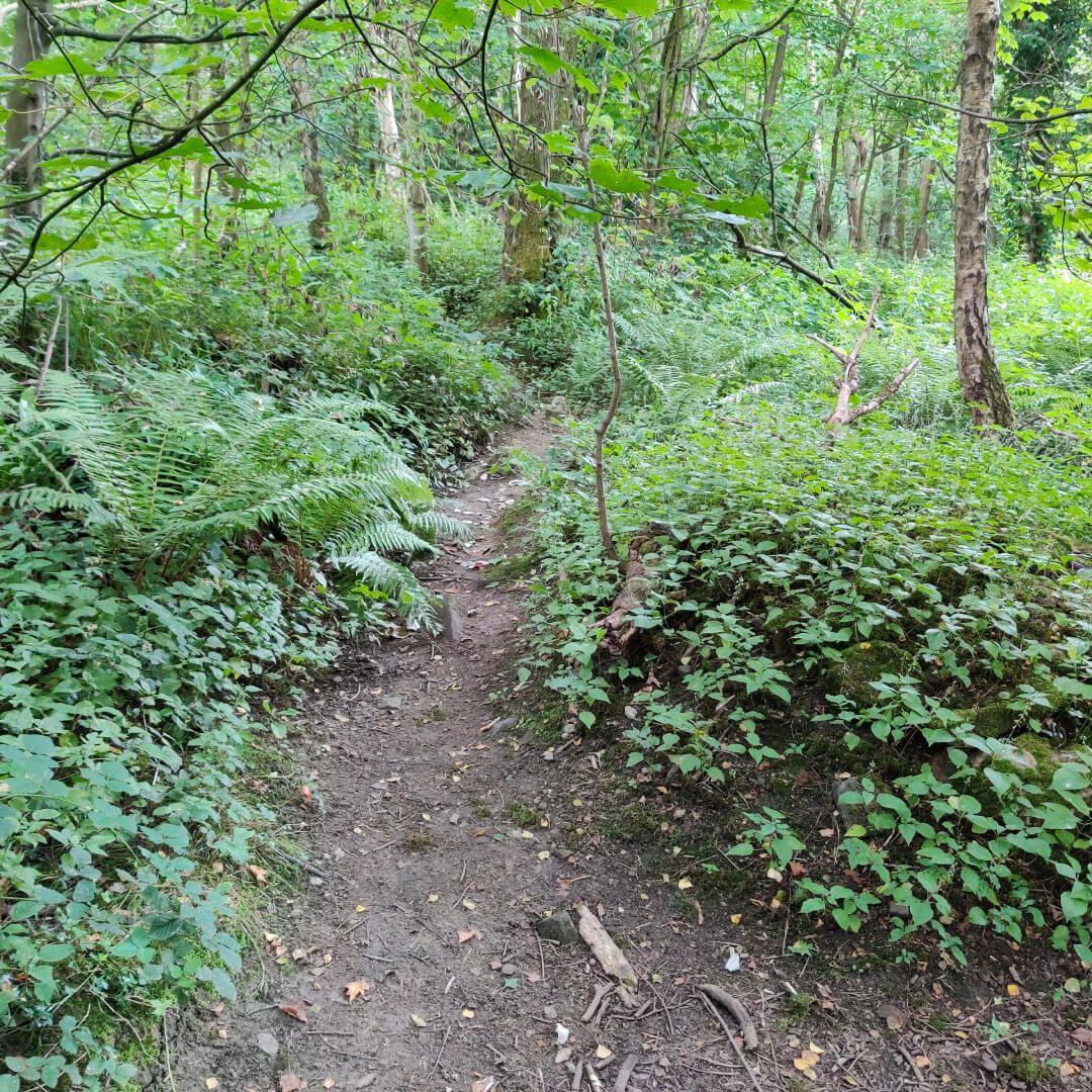 Calverley Wood path