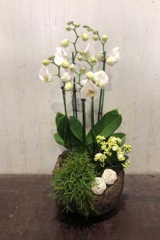 Ronde stenen plantenbak met orchidee