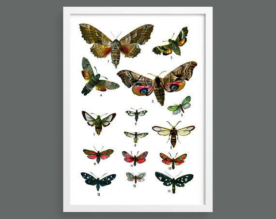 Botanical butterfly poster 6