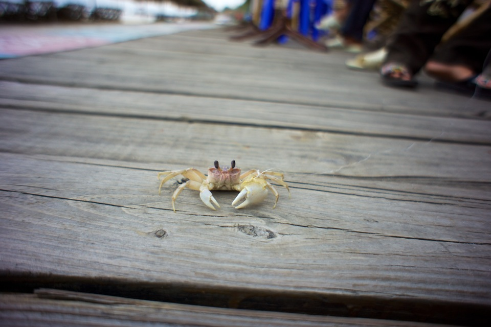 Crab on string