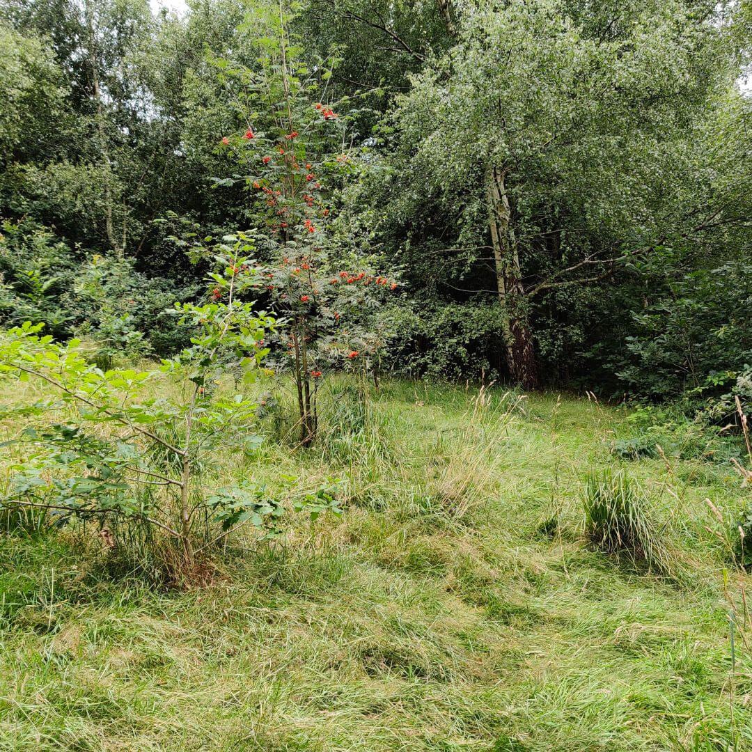 Sugarwell Hill Park Grass