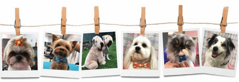 Collage of dogs with haircuts