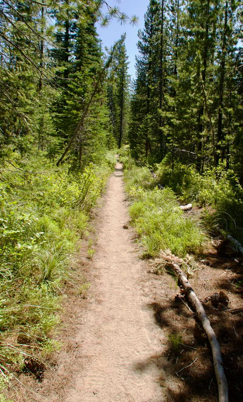 A long, straight section of the PCT