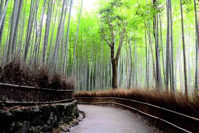 Magic Green - Building With Bamboo