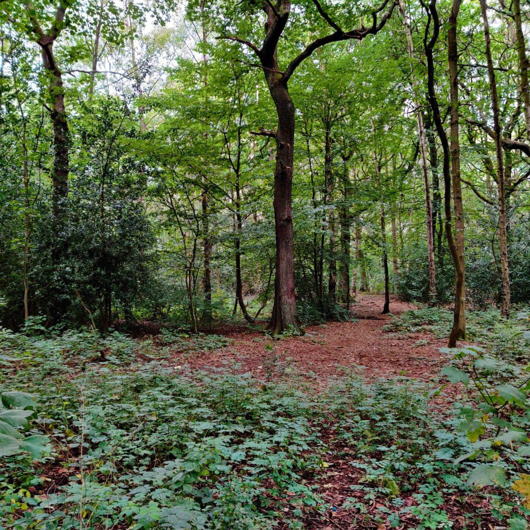 Middleton Wood