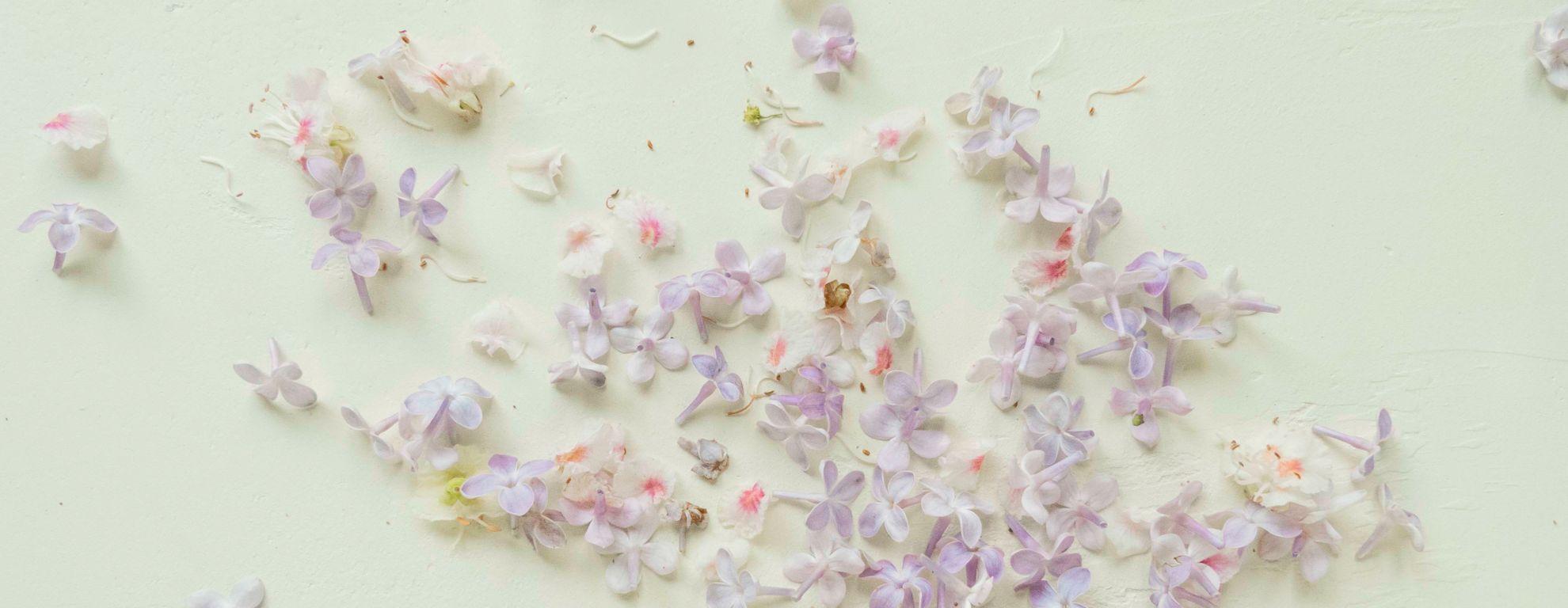 Planta de lavanda: propiedades y beneficios para la salud - Featured image