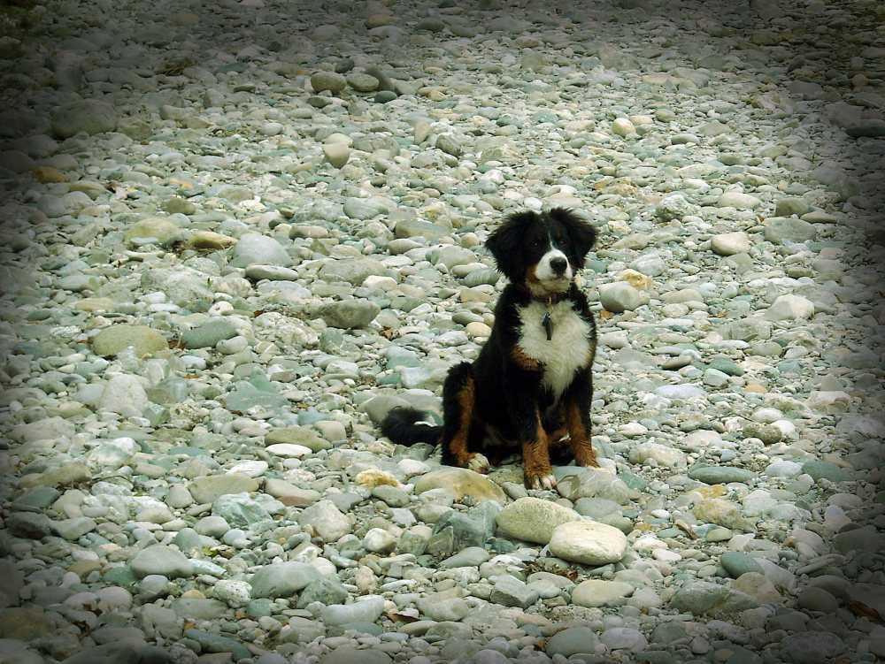 Sandras Hund Rocky