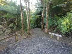 Start of Wairoa Loop track descent