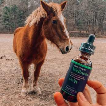 Organic cbd oil for horses