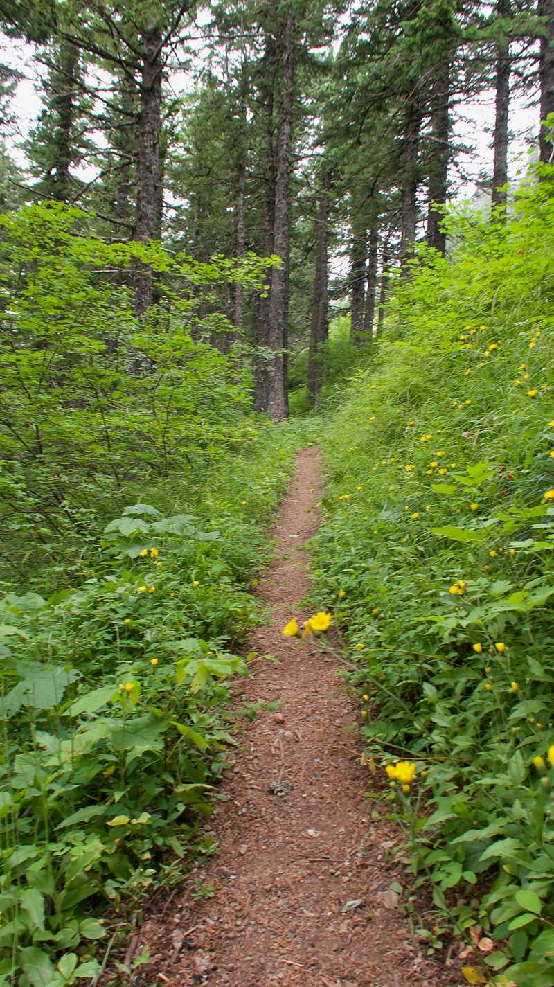 A smooth section of the PCT as it climbed Big Huckleberry Mountain