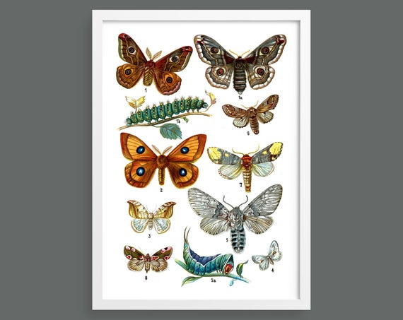 Botanical butterfly poster 9