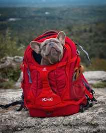 Trail Tested: Kurgo G-Train Backpack