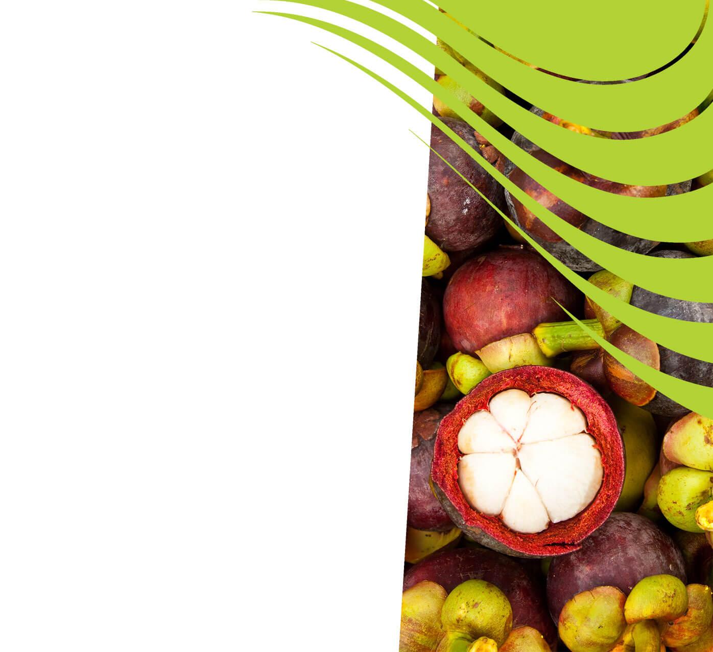 fertiliser for mangosteen