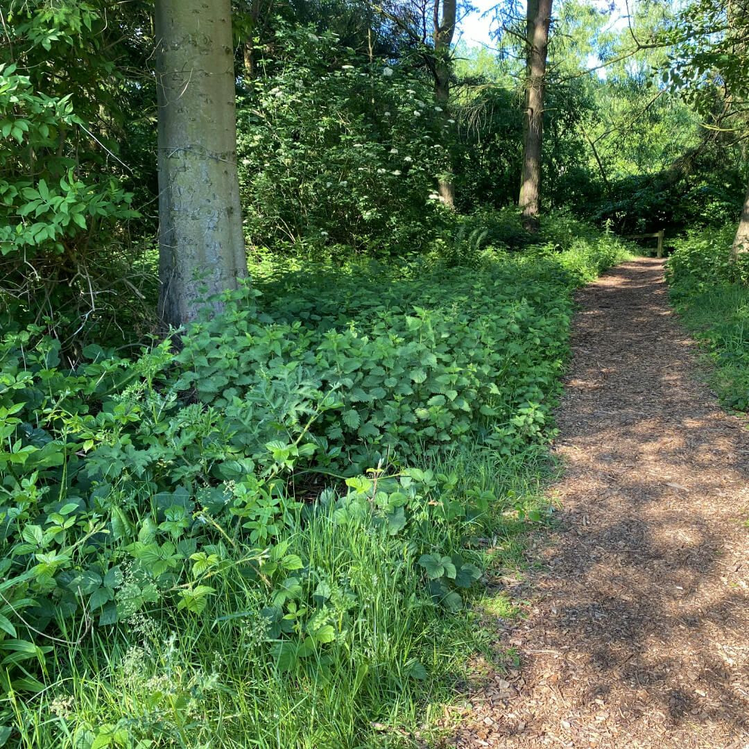 A path through the woodland at Golden Acre Park