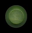 Flavor Cap Chili Lime
