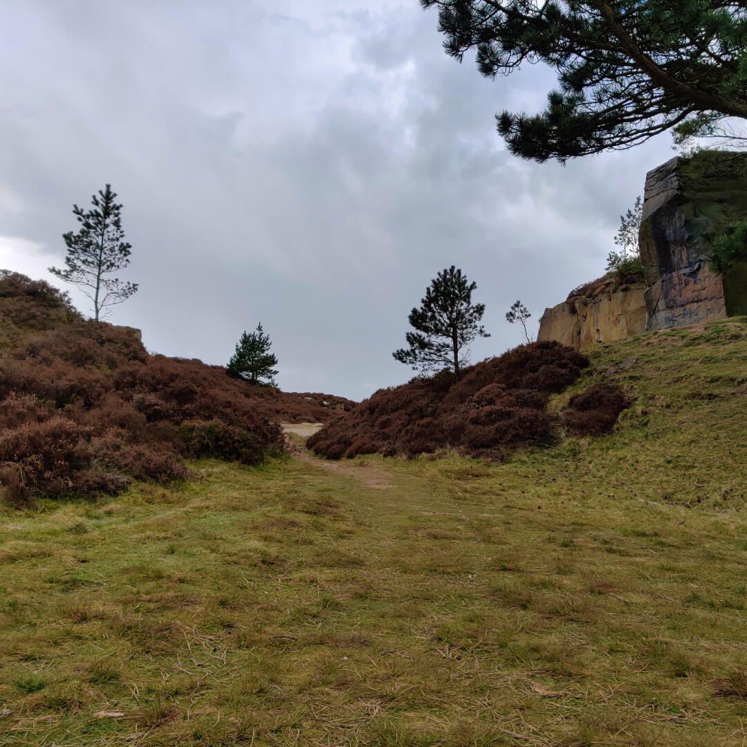 Ilkley Moor trees and dark sky