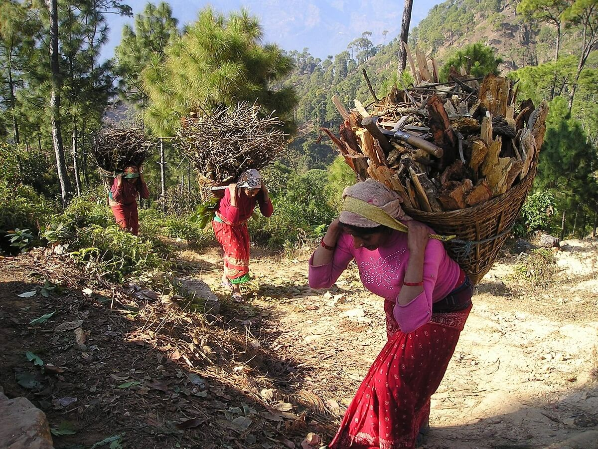 Nepali women Carrying Firewood - Hard Work