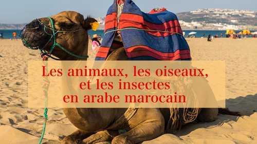 Les animaux, les oiseaux, et les insectes en arabe marocain