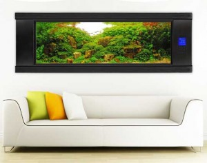 All About Wall Aquariums