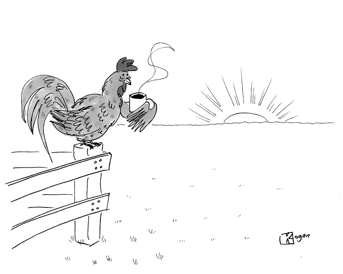 (Rooster is drinking coffee at sunrise.)