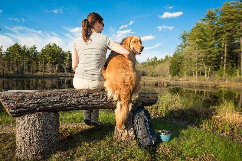 12 Best Dog Friendly Hikes in Massachusetts