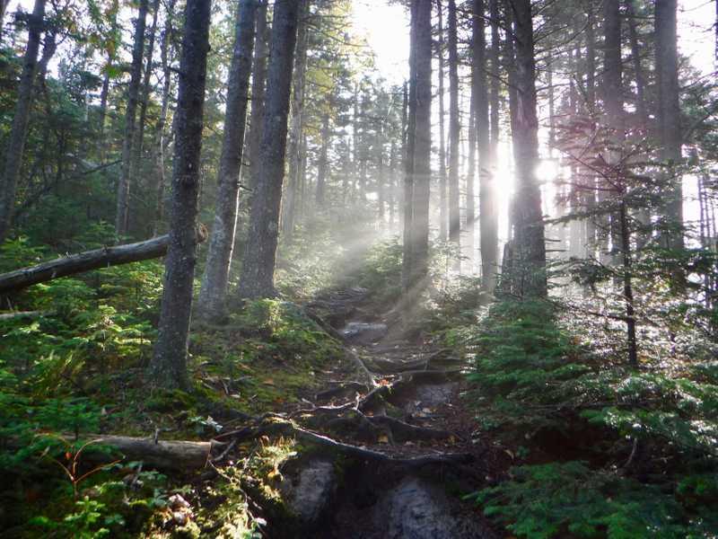 Sun breaking through Maine trees