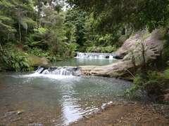 Mokoroa Stream rapids