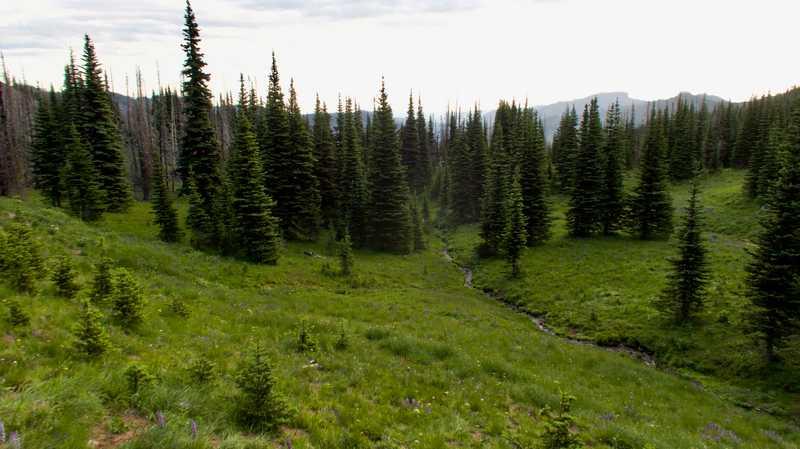 A pocket of green near Norse Peak