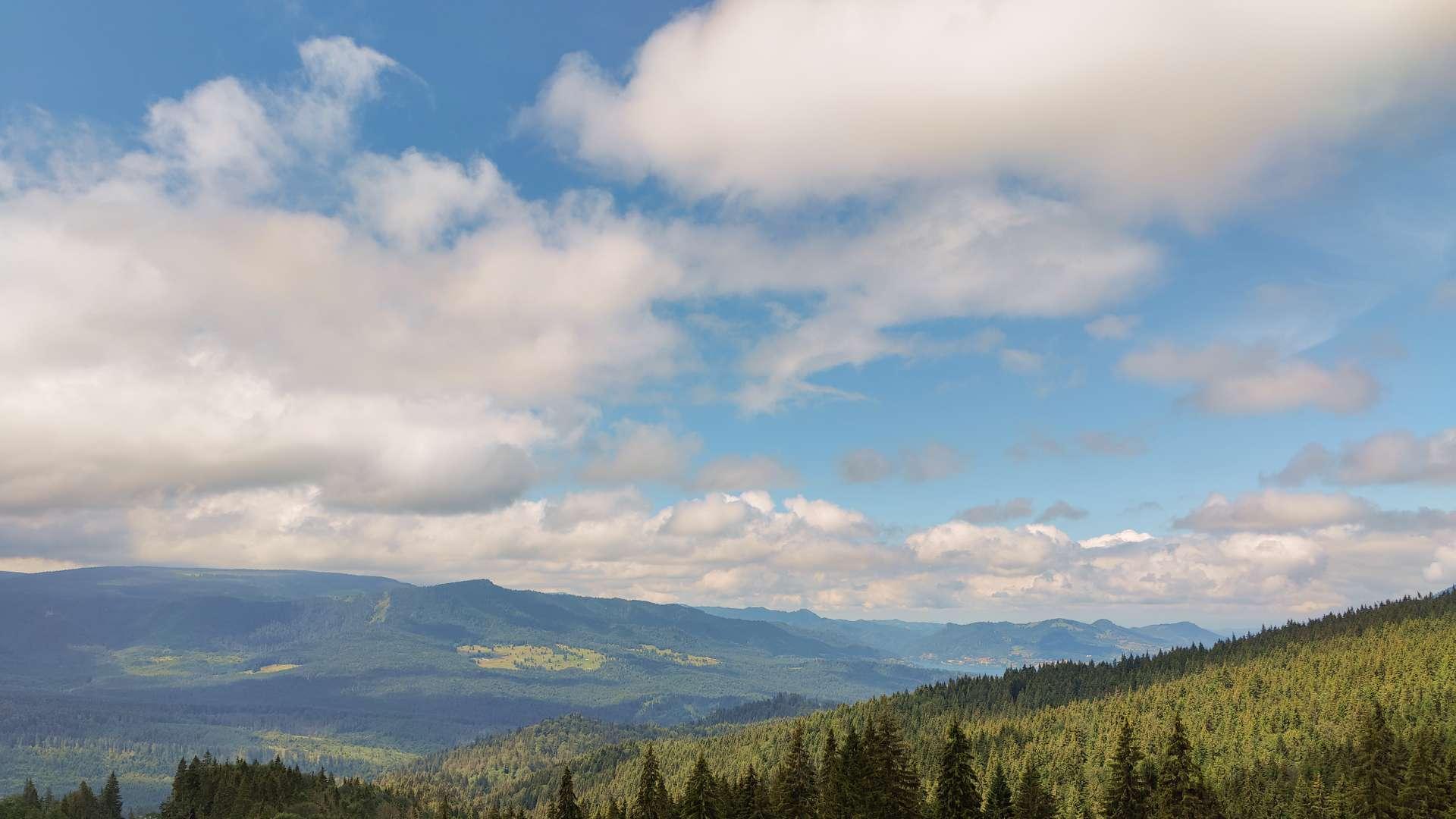 padure-colibita muntii apuseni cazare munte