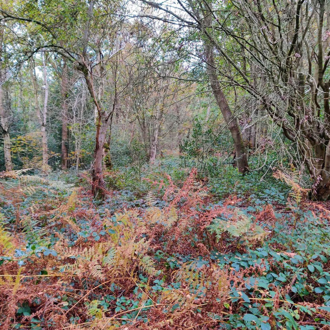 Adel Woods undergrowth