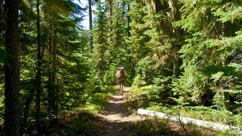 Dave on the trail with spruce trees