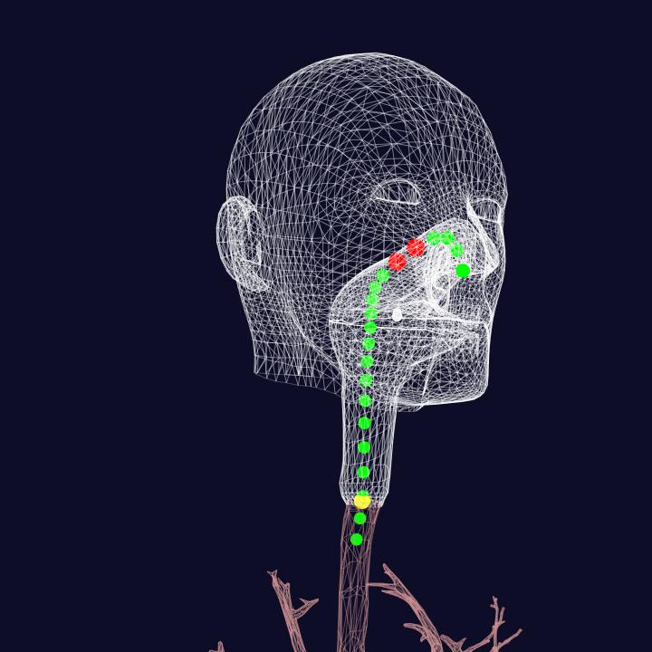 Bronchoscopy Simulation