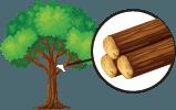 Freshly cut logs of hardwood trees