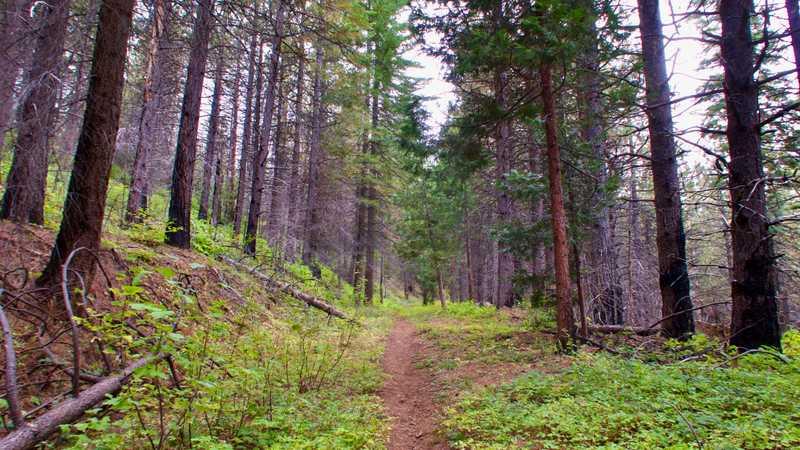 Climbing toward Buckhorn Mountain