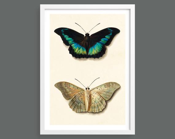 Two views of a butterfly