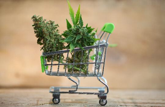 Shopping for Cannabis