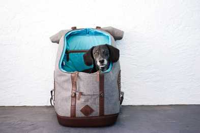 Trail Tested: Kurgo K9 Rucksack Dog Carrier