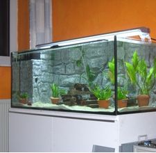 Recommended Frequency of Cleaning Fish Tanks