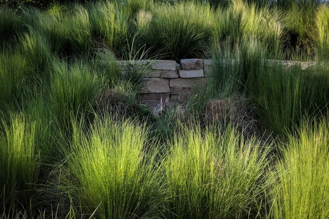 A rabbit sitting in front of a low stone wall, almost hidden in the tall grass.
