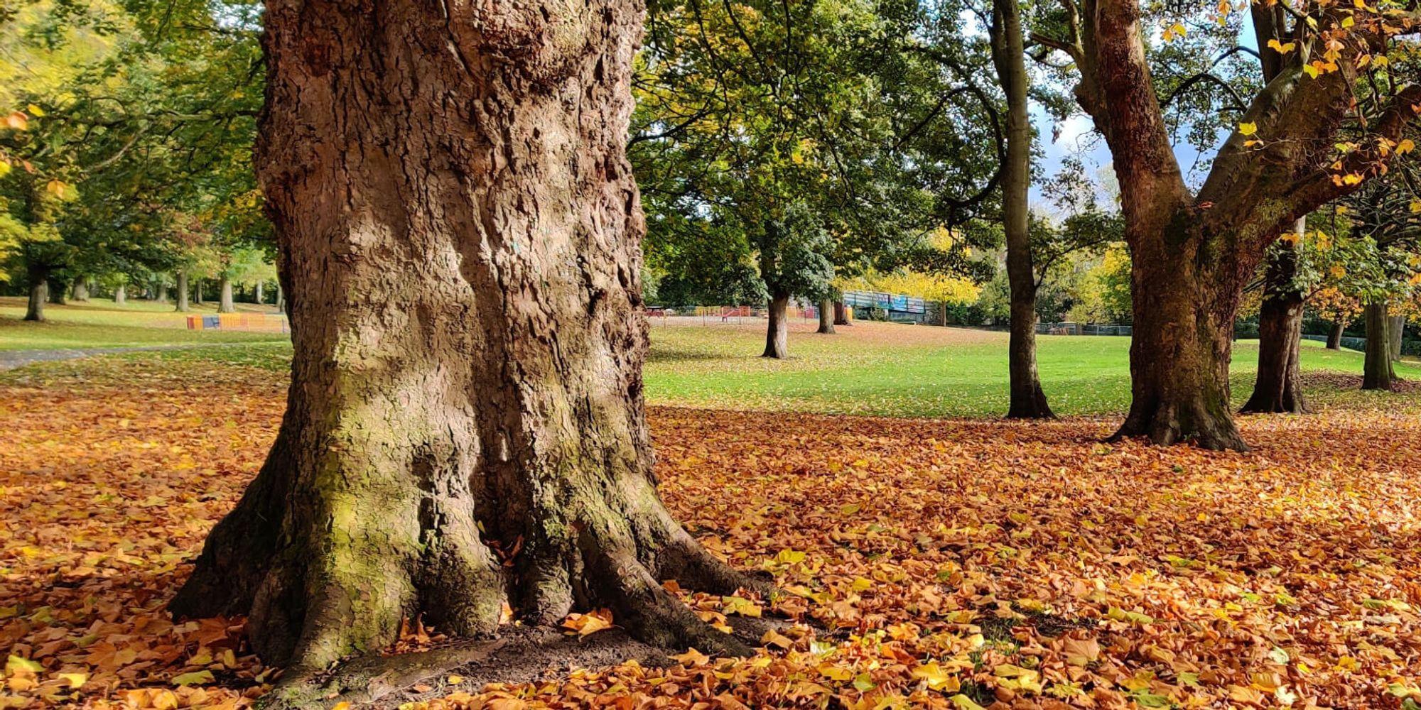 Golden Autumn leaves in Burley Park