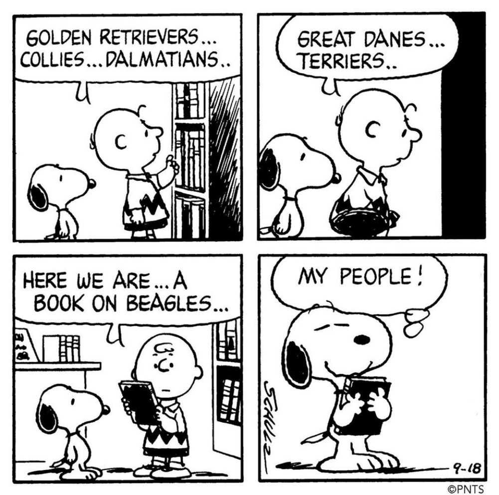 """Snoopy was handed a book about beagles and claimed: """"My people!"""". Credit to Charles M. Schulz Museum @ Facebook"""