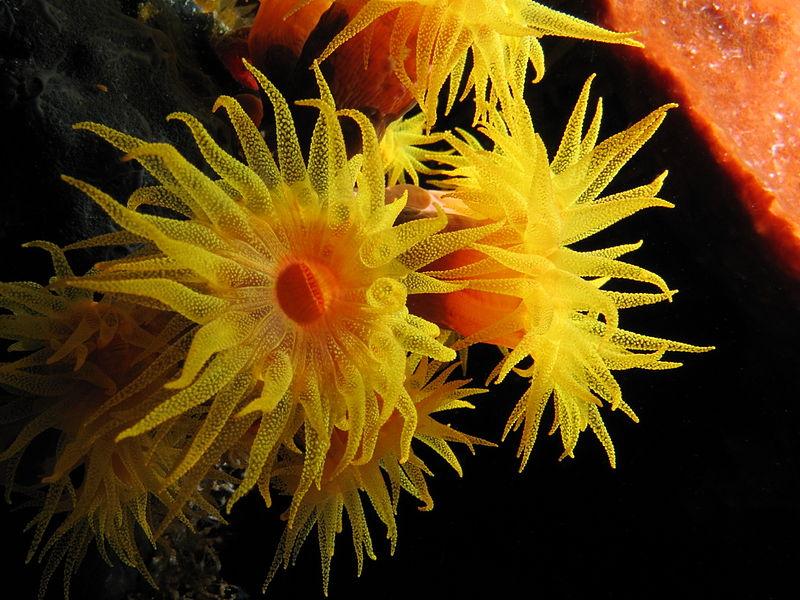 Coral-sol: Um risco para a biodiversidade