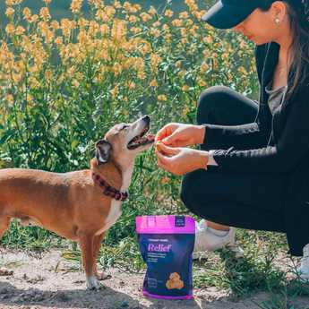 turmeric treats for dogs